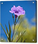 Just A Flower Acrylic Print