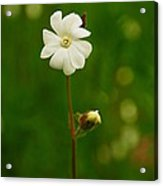 Just A Little White Flower Acrylic Print