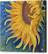 Just Another Sunflower Acrylic Print