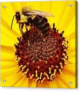 Just Bee Acrylic Print