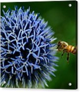Just Beeing There Acrylic Print
