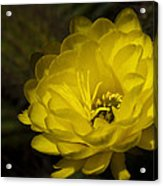 Just Call Me Mellow Yellow  Acrylic Print