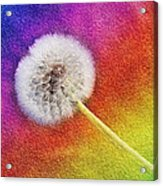 Just Dandy Rainbow 2 Acrylic Print