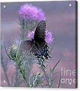 Just Fluttering By Acrylic Print