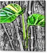 Just Green 2 By Diana Sainz Acrylic Print