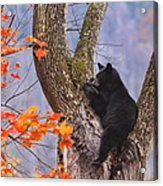 Just Hanging Out Acrylic Print