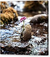 Just Let Your Love Flow Acrylic Print