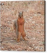 Just Looking Acrylic Print by Margaret McDermott