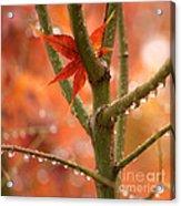 Just One Leaf Acrylic Print