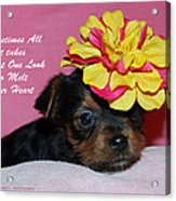 Just One Look Acrylic Print