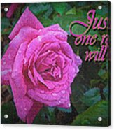 Just One Rose Acrylic Print
