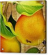 Just Pears Acrylic Print