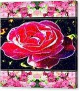 Just Rosy Acrylic Print