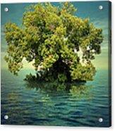 K15 Acrylic Print by Radoslav Penchev