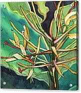 Kahili Ginger Acrylic Print