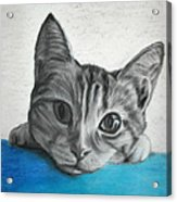 Kahlua Kitty Acrylic Print