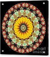 Kaleidoscope Ernst Haeckl Sea Life Series Acrylic Print by Amy Cicconi