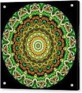 Kaleidoscope Ernst Haeckl Sea Life Series Triptych Acrylic Print by Amy Cicconi