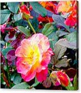 Kaleidoscope Of Roses Acrylic Print