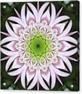 Kaleidoscope Pink Daisy Acrylic Print