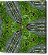 Kalido Plant Fronds Acrylic Print