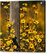 Kansas Bouquet Acrylic Print