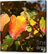Kansas Fall Leaves Close Up Acrylic Print