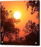 Kansas Golden Sunset With Trees Acrylic Print by Robert D  Brozek