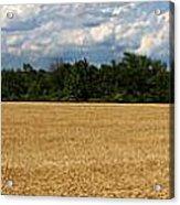 Kansas Wheat Field 5a Acrylic Print