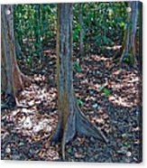 Kapok Trees Along The Trail In Manual Antonio National Preserve-costa Rica Acrylic Print
