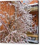 Karma In Winter Acrylic Print