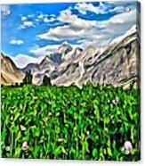 Kashmir Field Acrylic Print