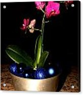 Kathy's Orchid Acrylic Print