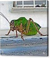 Katydid Acrylic Print