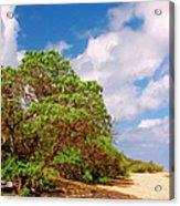 Kauai Beach Acrylic Print