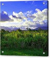 Kauai Grass Acrylic Print
