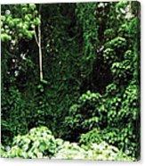 Kauai Trees Acrylic Print
