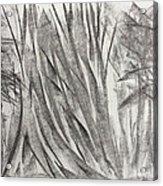 Kauri Giant Acrylic Print