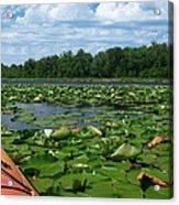 Kayaking Among The Waterlillies Acrylic Print