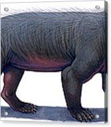 Kayentatherium, A Mammal-like Acrylic Print