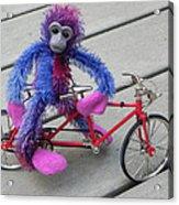 Toy Monkey On Toy Bike Acrylic Print