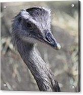 Keep In View - Emu Portrait Acrylic Print