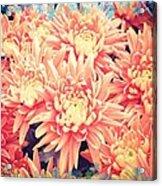 Keepsake Chrysanthemum  Acrylic Print