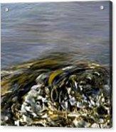 Kelp In Sea Acrylic Print by IB Photo