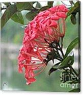Kerala Beauty Acrylic Print
