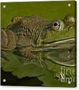 Kermit Acrylic Print by Susan Candelario