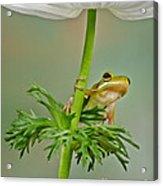 Kermits Canopy Acrylic Print