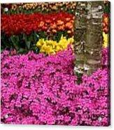Keukenhof Floral Strata Acrylic Print