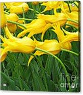 Keukenhof Gardens 13 Acrylic Print