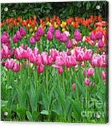 Keukenhof Gardens 14 Acrylic Print